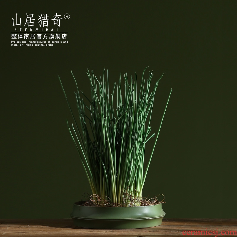 Lucky bamboo now rising refers to hydroponic flower implement creative home indoor meaty plant ceramic bamboo flower pot