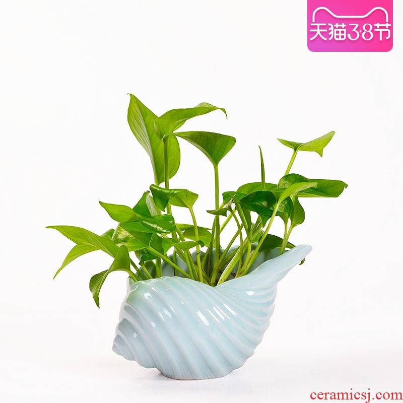 Mediterranean style ceramic shells nonporous contracted copper money plant grass flower pot refers to creative hydroponic plant containers