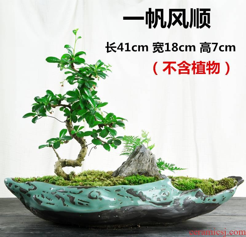 Bonsai flowers, potted landscape ceramic purple creative move Chinese wind, green potted asparagus calamus large money plant