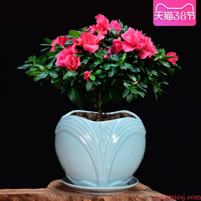 Ceramic flower pot tray with large money plant celadon orchid pot pot meat meat, green potted the plants, fleshy