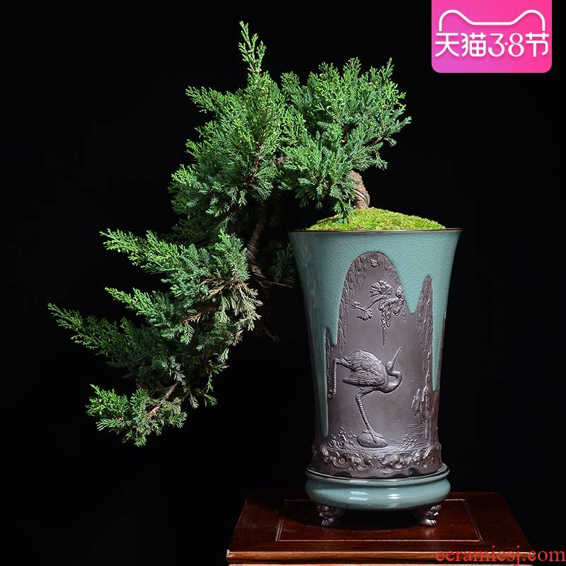 Ceramic purple orchid basin large indoor green plant bonsai new Chinese style high creative potted guest - the greeting pine special orchid pot