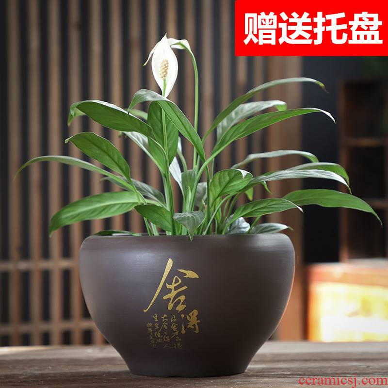 Purple sand flowerpot ceramic heavy large butterfly orchid asparagus with desktop tray was creative move money plant many flowers potted the plants