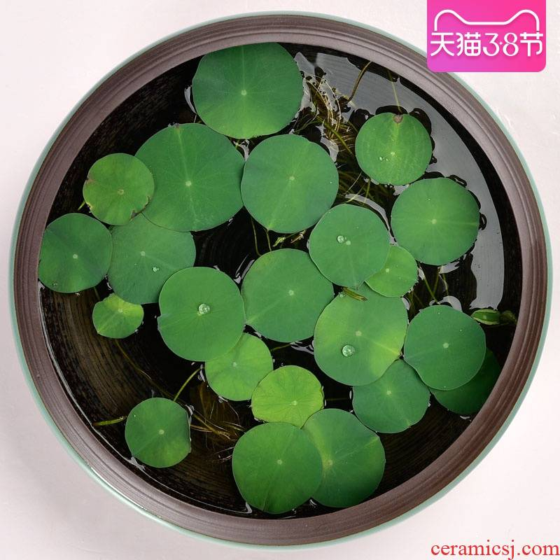 Water lily flower pot ceramic large Water stone miniascape copper bowl lotus hydroponic plant daffodils grass flower pot