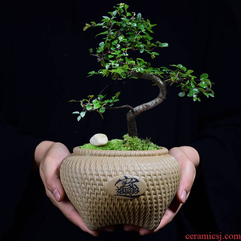 Creative coarse pottery flowerpot ceramic green plant more than other rich bonsai tree bonsai flower pot meat meat meat plant POTS