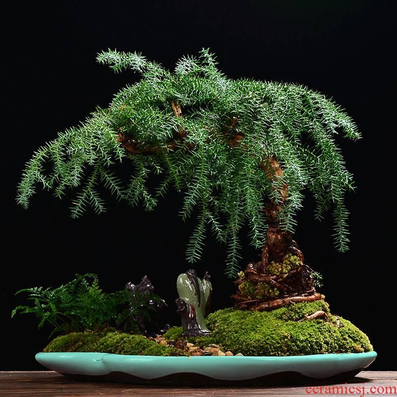 YOU bonsai POTS ceramic extra large indoor micro landscape balcony oval pot rockery miniascape basin