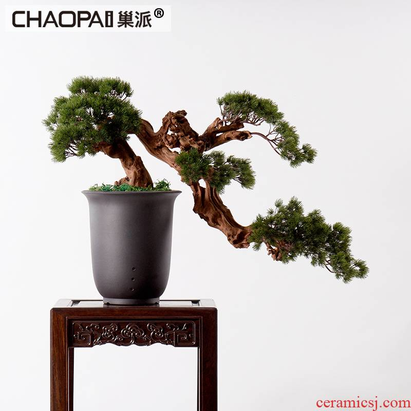 New Chinese style guest - the greeting pine furnishing articles hotel example room decoration indoor sitting room false bonsai podocarpus potted ceramics