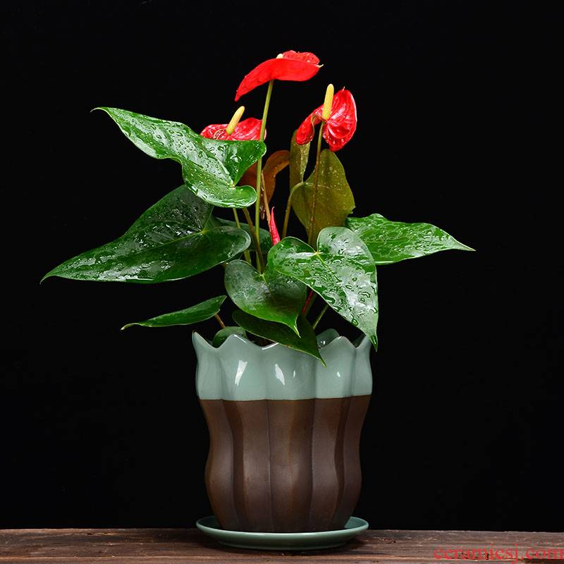 YOU much meat flowerpot ceramic wholesale clearance package mail creative large tray bracketplant other flesh POTS of the plants