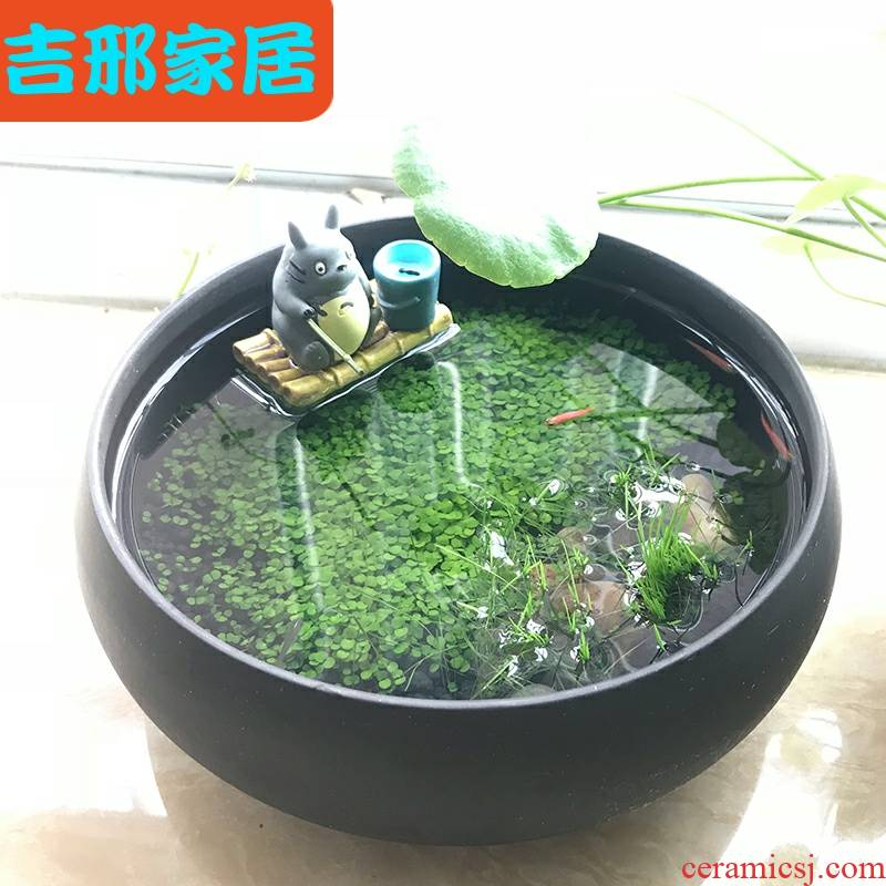 Office desktop micro landscape aquariums creative hydroponic plant ecological purple ceramic pot plant seeds