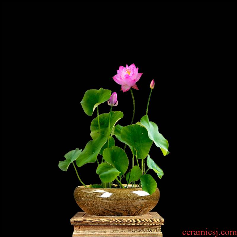 C155 jingdezhen ceramics goldfish bowl lotus bowl lotus tortoise at the end of the cylinder tea pot water shallow fish bowl