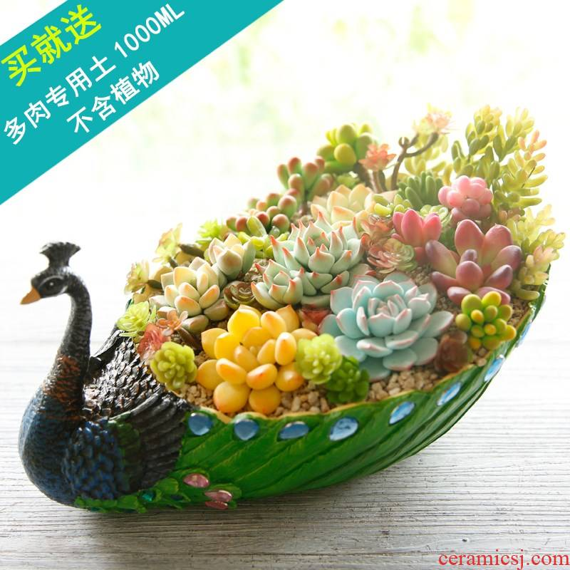 Special offer large peacock fleshy flowerpot creative platter flesh character combination potted the plants plastic not ceramic