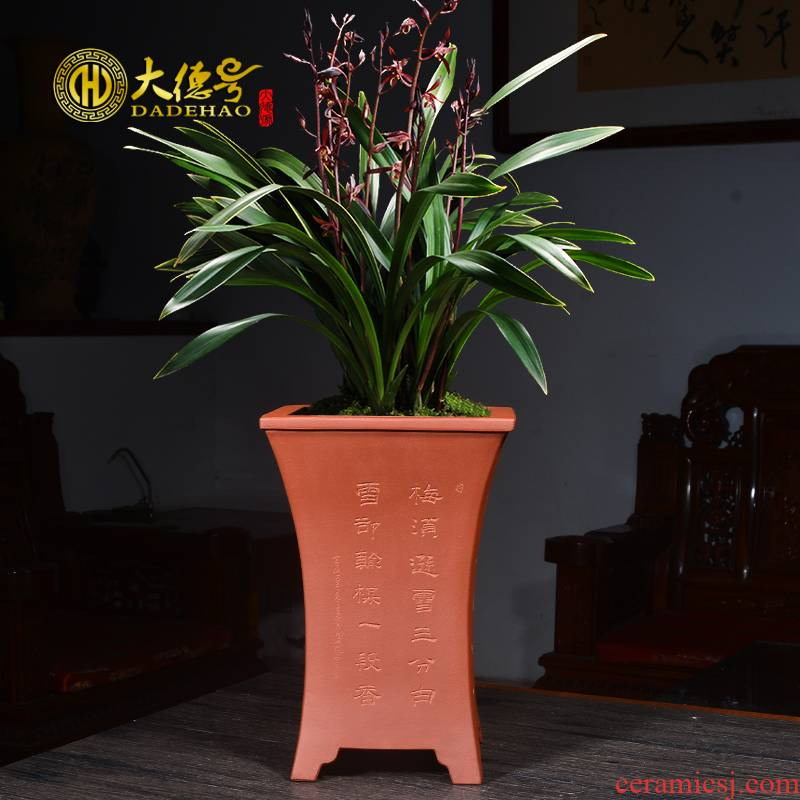 Greatness, purple orchid flower POTS square blue grass potted facilities. We ink special LanChunLan orchid flower POTS of the four seasons