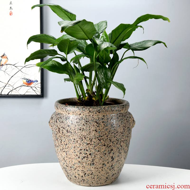 In ceramic flower POTS of meat contracted sitting room, miniascape of high - grade banyan basin old running the flowerpot oversized bag mail green plant