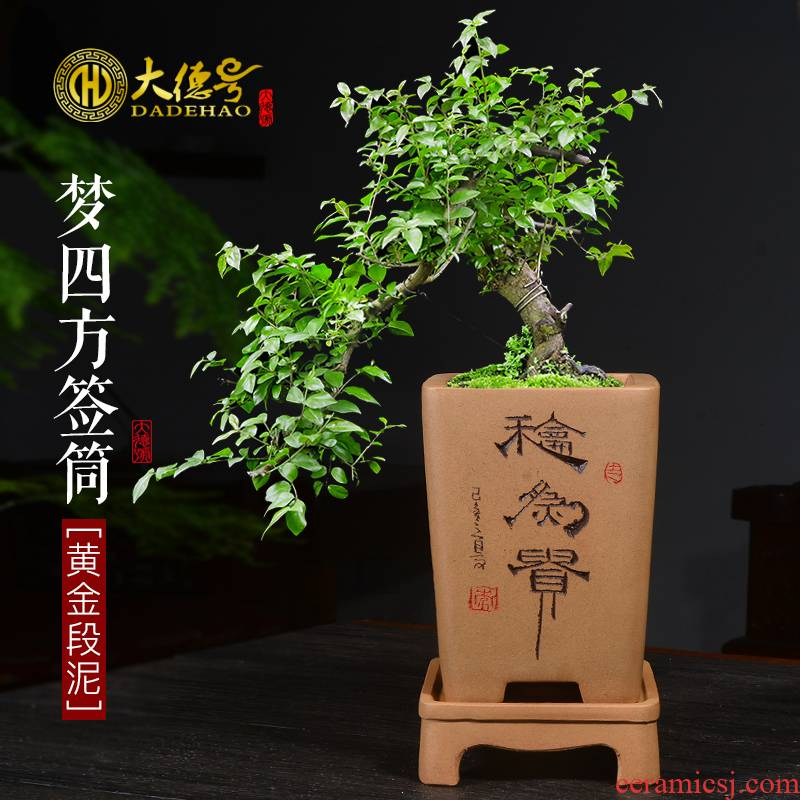 Greatness, yixing ceramic purple orchid basin chunlan ponies bluegrass asparagus, green plant special orchid orchid flower POTS