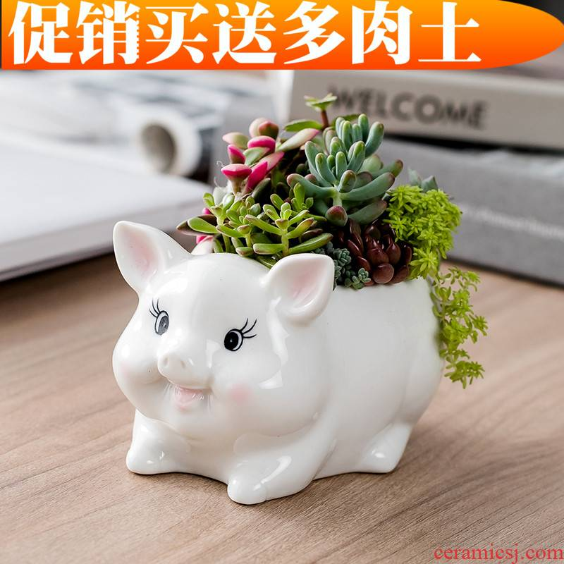 Department of European style of the cartoon animal pig meat flowerpot creative move more lovely hand - made ceramic flower pot home sitting room