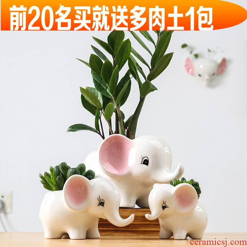 European contracted sitting room of indoor the plants flower pot home creative move and lovely cartoon ceramic flowerpot flower implement more meat