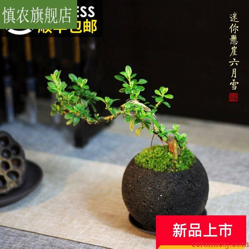 The Mini cliff June snow zen miniature bonsai pot desk purple moss green plant evergreen tea table surface