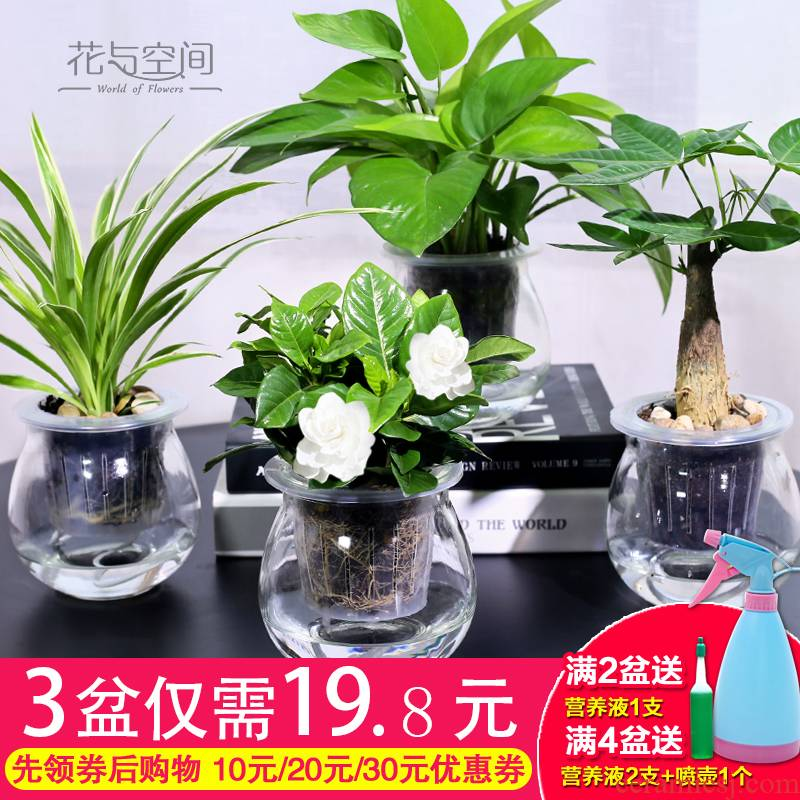 Lazy fleshy flowerpot creative ceramic refers to copper grass indoor hydroponic the plants potted meat meat automatic water basin