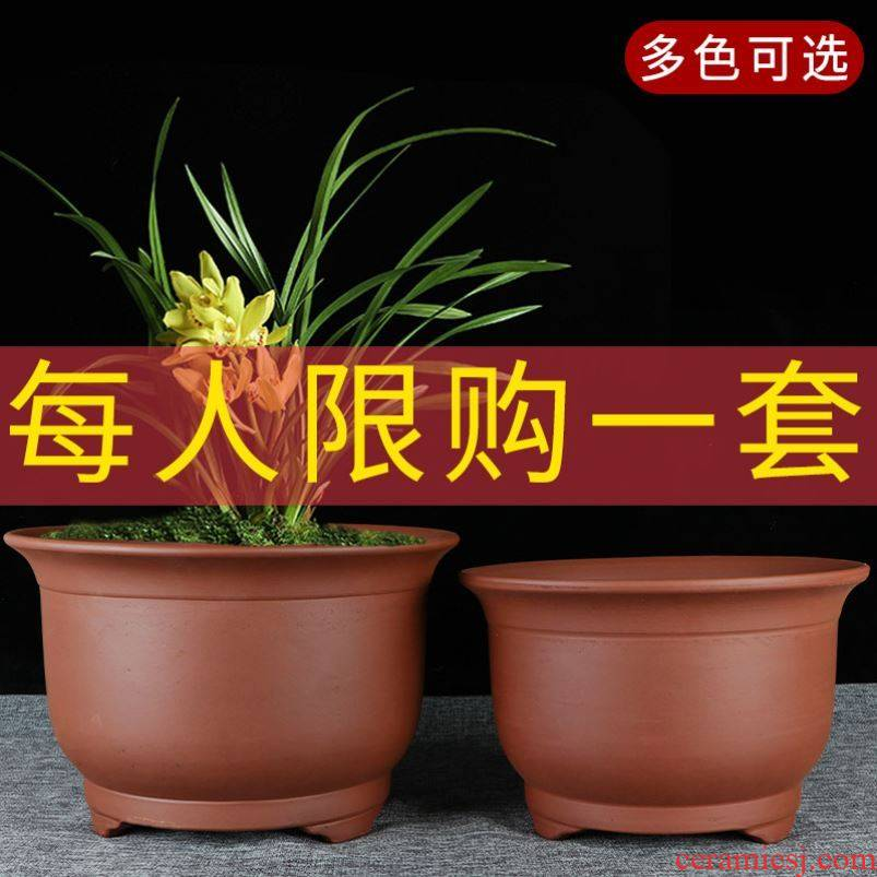 Chinese rose flower clivia to heavy pot balcony miniascape of violet arenaceous basin round large indoor flowers large diameter