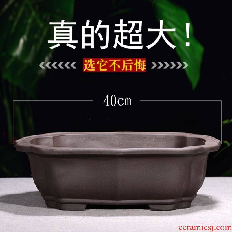 Courtyard home gardening banyan tree orchids basin fleshy flower POTS, large diameter thick TaoFang pottery alien planting the balcony