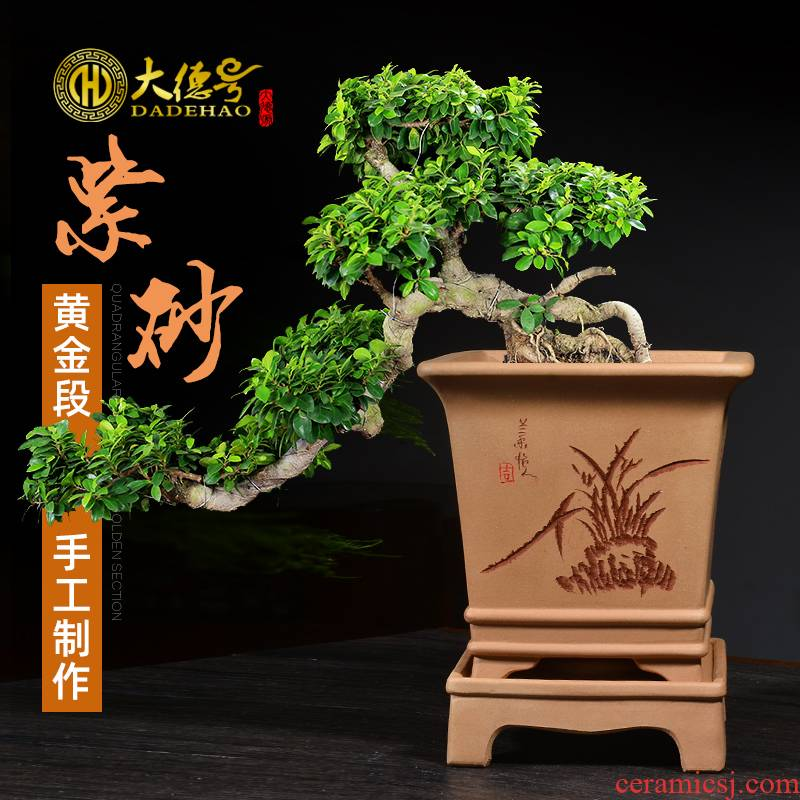 Greatness, square with bonsai pot tray yixing purple sand flowerpot of pottery and porcelain rich tree stump special orchid pot