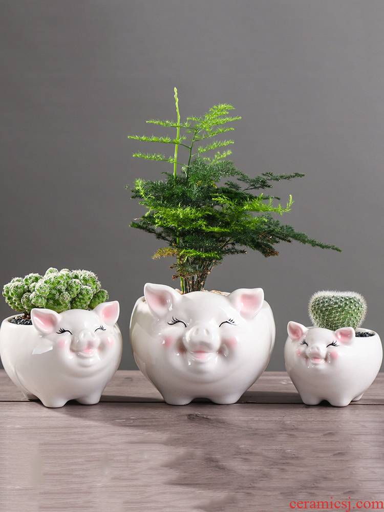 Express cartoon pig meat flowerpot creative move more small green plant asparagus other animals potted flower exchanger with the ceramics