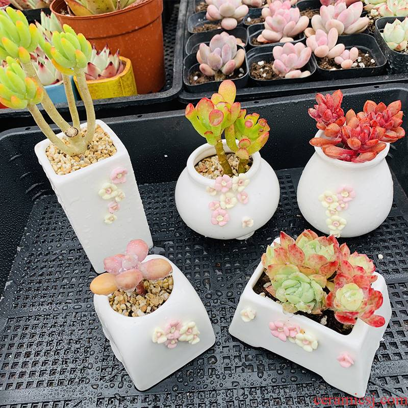 Thumb end pinch flower small basin of Korean fleshy flowerpot fleshy white porcelain basin of mini little old running the indoor and pure and fresh