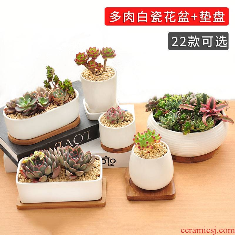 Meaty plant POTS indoors contracted white ceramic creative modern meat meat small bowl with bamboo tottenham price clearance