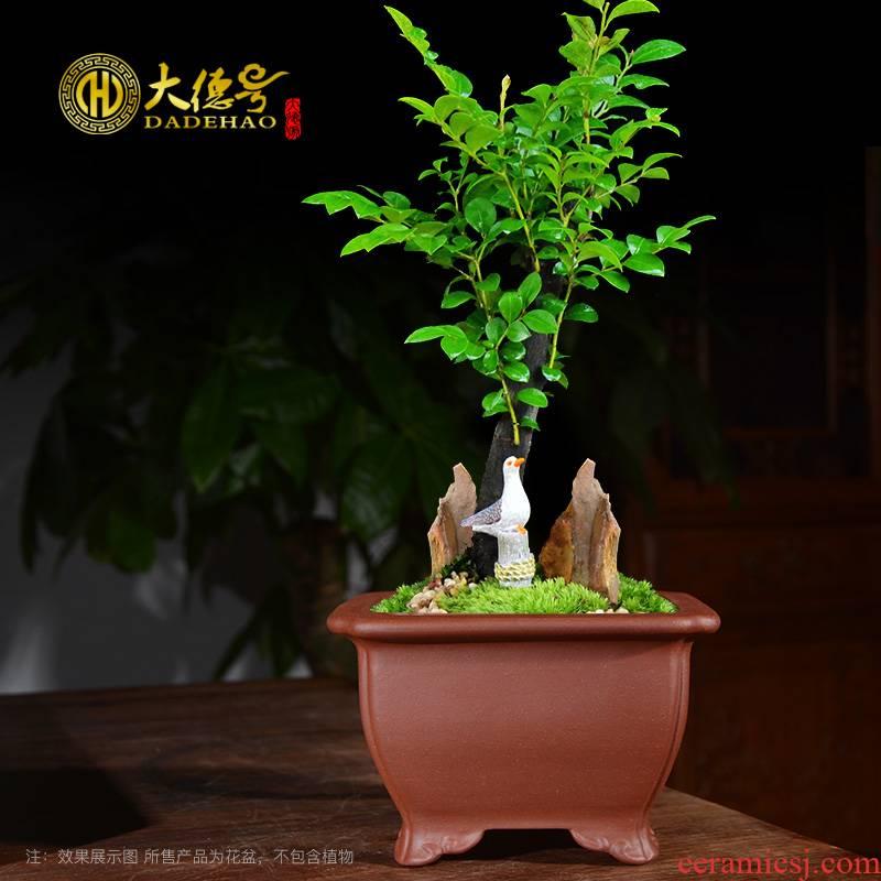 Purple sand flowerpot square indoor potted bonsai pot desks meaty plant calamus asparagus rosewood small basin