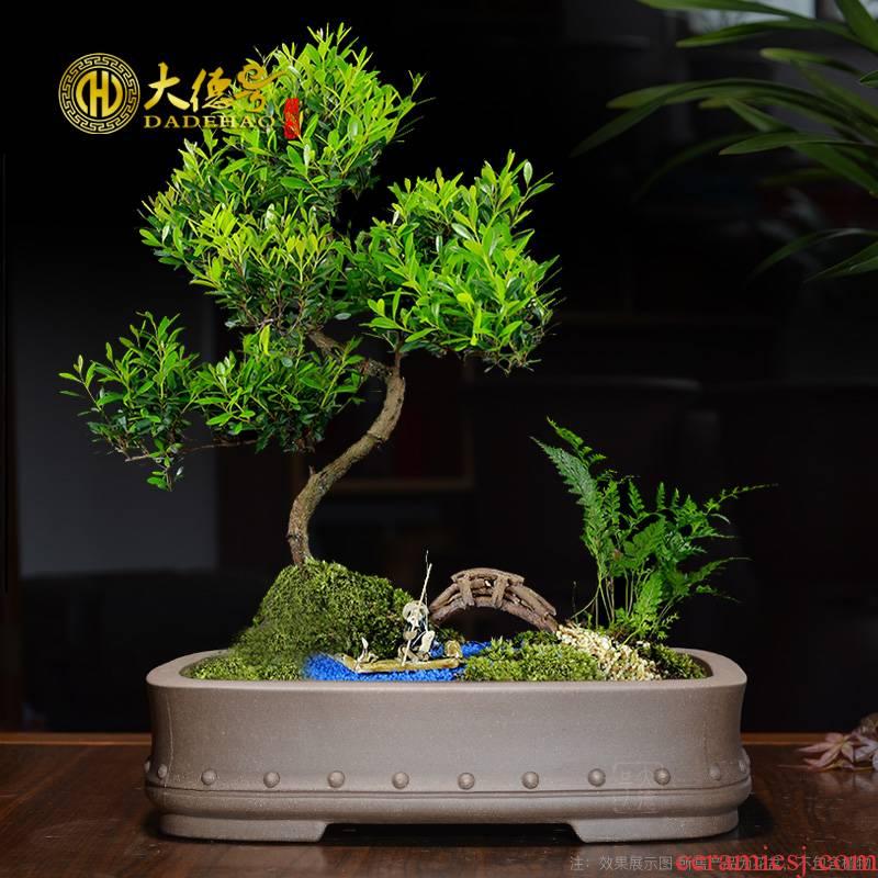 Boutique yixing purple sand flowerpot Chinese wind miniature creative flower pot large rectangle fake rocks bibulous bonsai pot