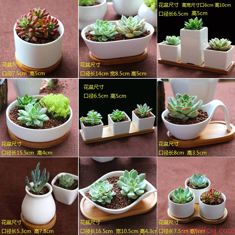 Containing tray was special flower pot the plants flower POTS, fleshy meat meat meat more ceramic basin fleshy, contracted white porcelain basin