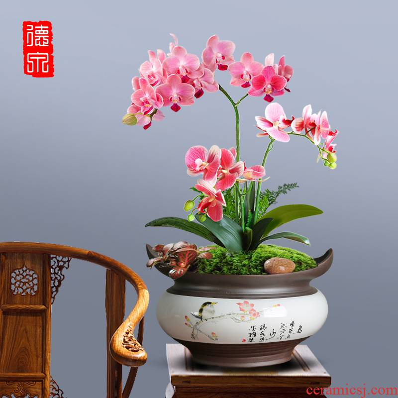 Celadon colorful butterfly orchid flower POTS hand - made contracted creative purple asparagus with ceramic tray was large new during the Spring Festival