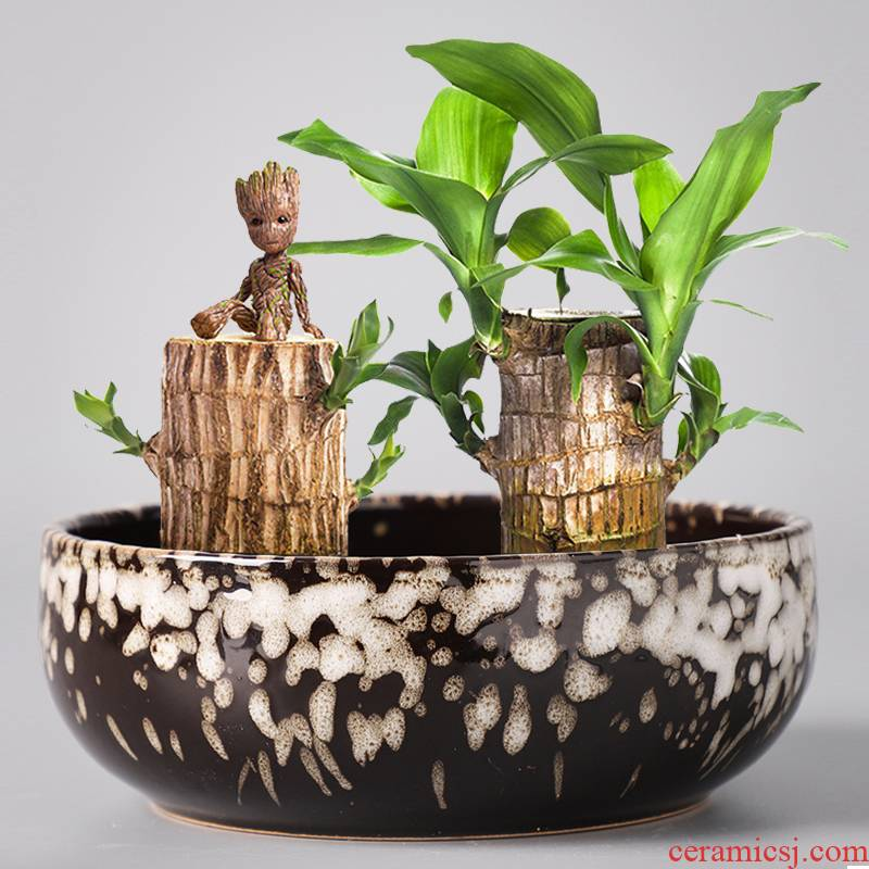 Brazilwood dedicated pot ceramic hydroponic the plants lucky lucky bamboo wood tray tower water bamboo desktop small potted plant
