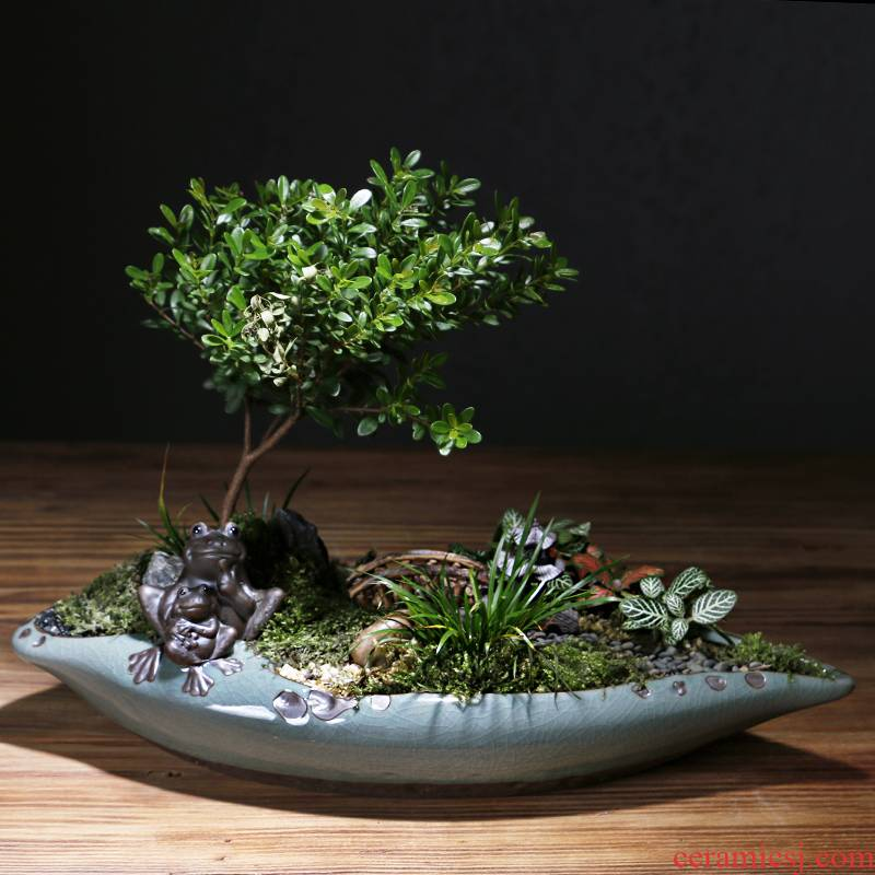 Chinese wind combination flowerpot brother ceramic up creative move the desktop, the plants potted meat calamus asparagus bonsai pot