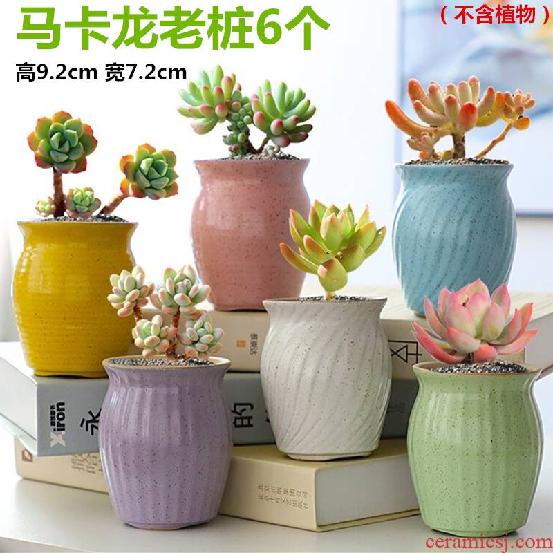 The Fleshy flower pot set special offer a clearance package mail coarse pottery breathable creative indoor small basin of the old running wholesale meat meat the plants