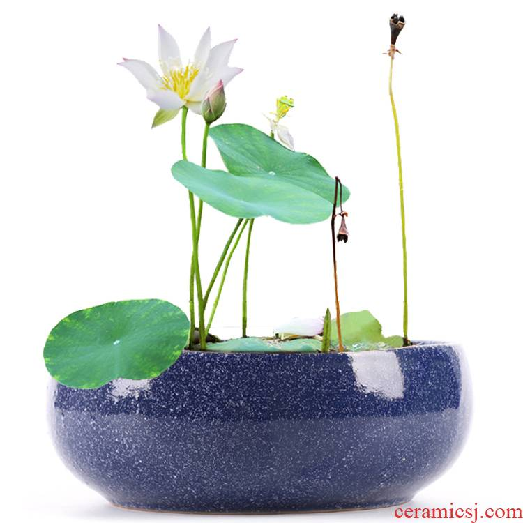 Copper grass special ceramic hydroponic flower pot water lily bowl lotus basin cylinder withered lotus grass daffodils money without hole more than meat
