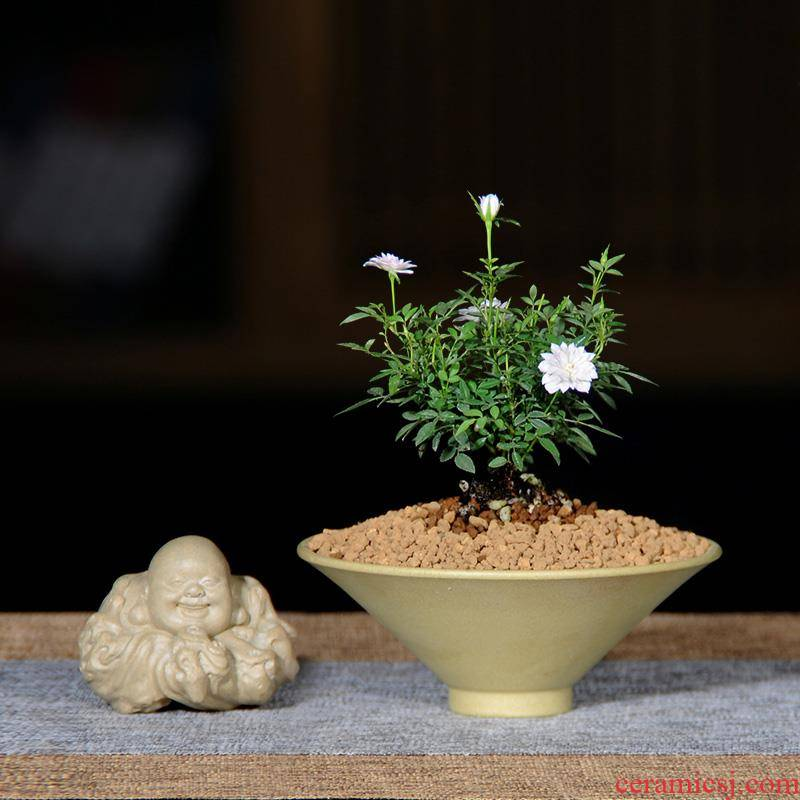 Authentic JiYi female Chinese rose, bonsai micro mini rose four seasons flowering the plants landscape indoor furnishing articles gifts tea table