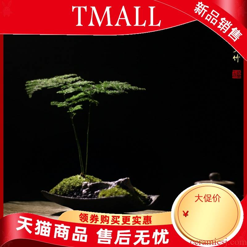 Asparagus moss coarse pottery Chinese Japanese zen dry landscape rockery micro sitting room tea table surface study potted bonsai