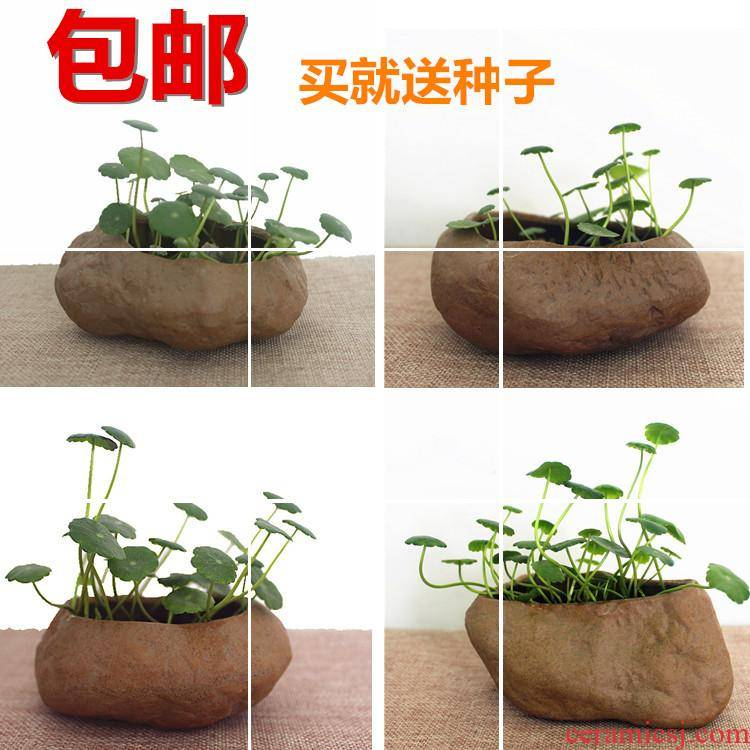 Porcelain stone flower implement indoor desktop hydroponic flower grass cooper faceplate flowerpot money plant flower pot soil culture, fleshy
