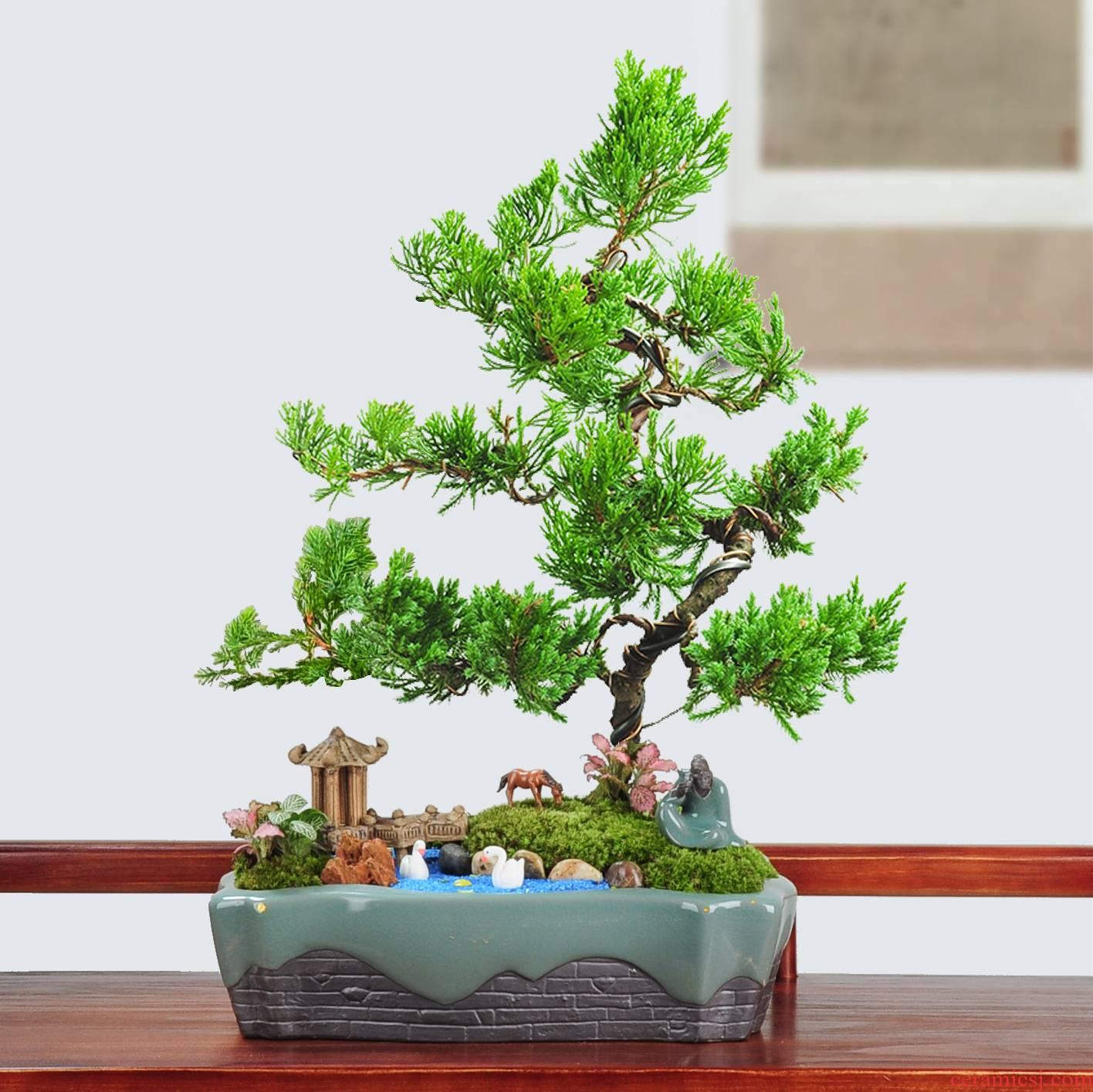 The elder brother of The ceramic up with breathable soil micro landscape large flower pot new preferential elm banyan lobular rosewood DIY landscape