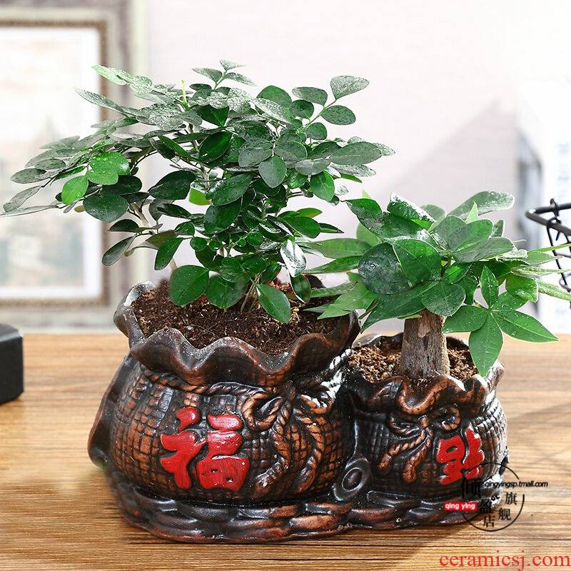 Rich tree potted indoor potted transshipment bamboo green, the plants, plant office podocarpus miniascape ceramic flower pot