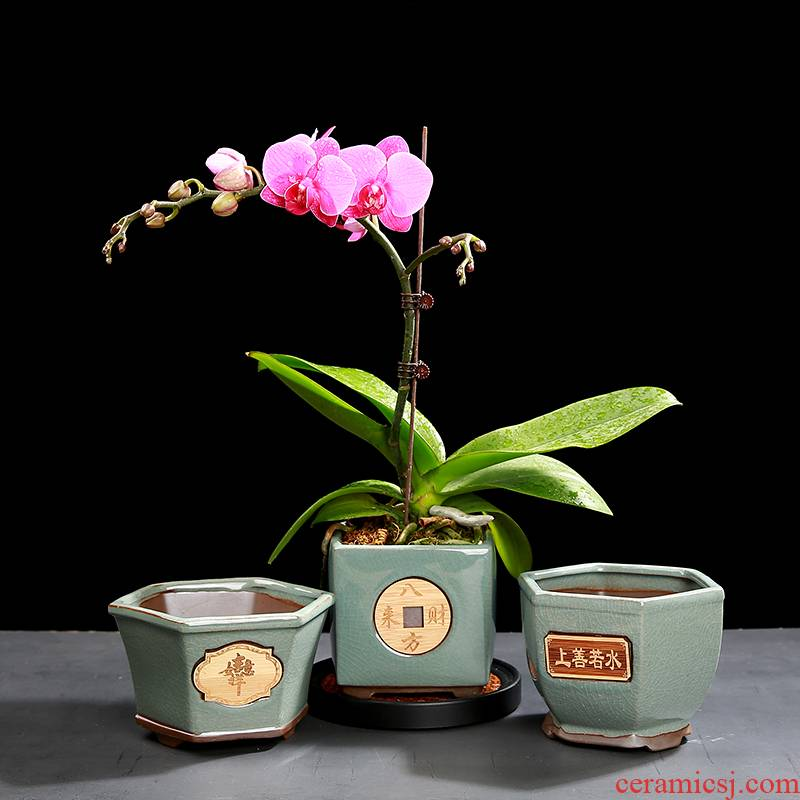 Purple sand flowerpot work rich tree asparagus flower pot in meaty plant indoor potted bracketplant money plant flower pot