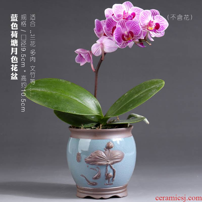 Butterfly orchid flower POTS vent size special creative purple high - grade ceramic pot round expressions using basin a clearance sale