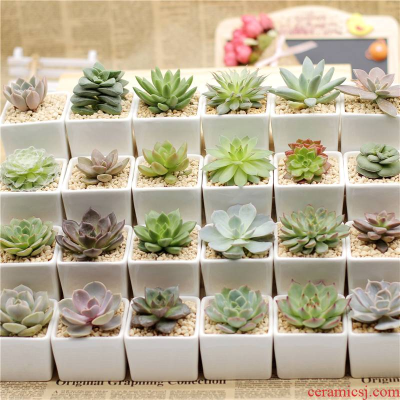Ceramic radiation fleshy flowerpot send soil combination of potted the plants against a collar for a horse mail 】 【 desktop more meat