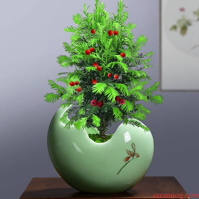 Large ceramic clay containers creative contracted move plant vessel desktop more than other meat copper grass orchid pot