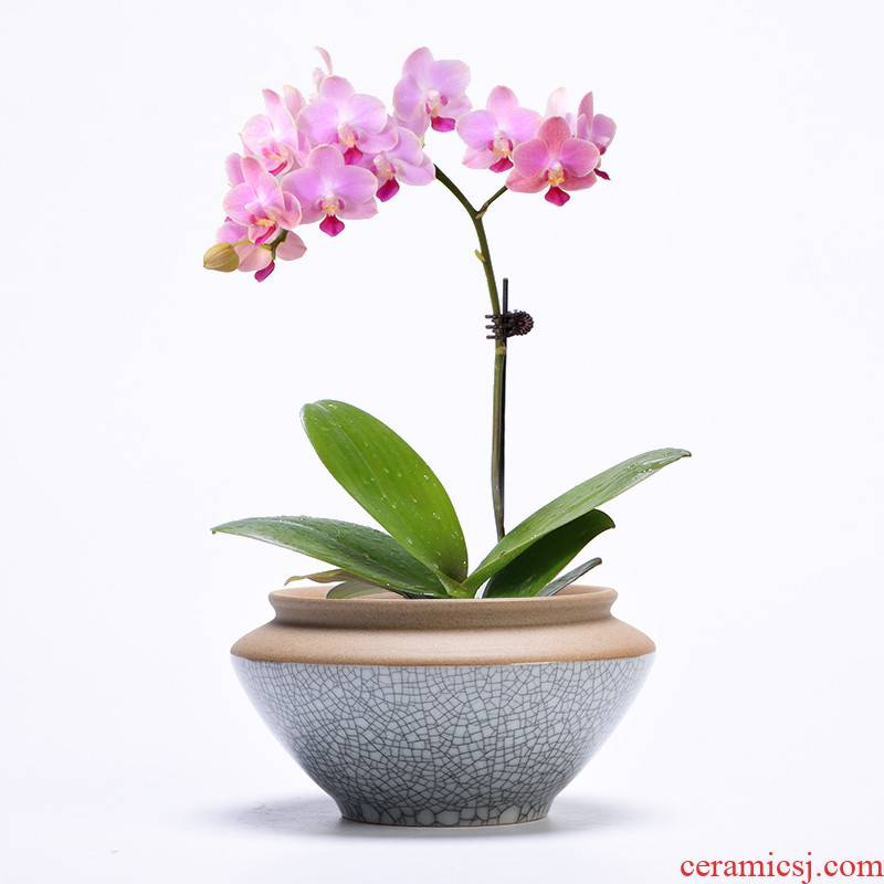 Office green plant household indoor desktop potted meat more creative ceramic rich tree other butterfly orchid flower POTS