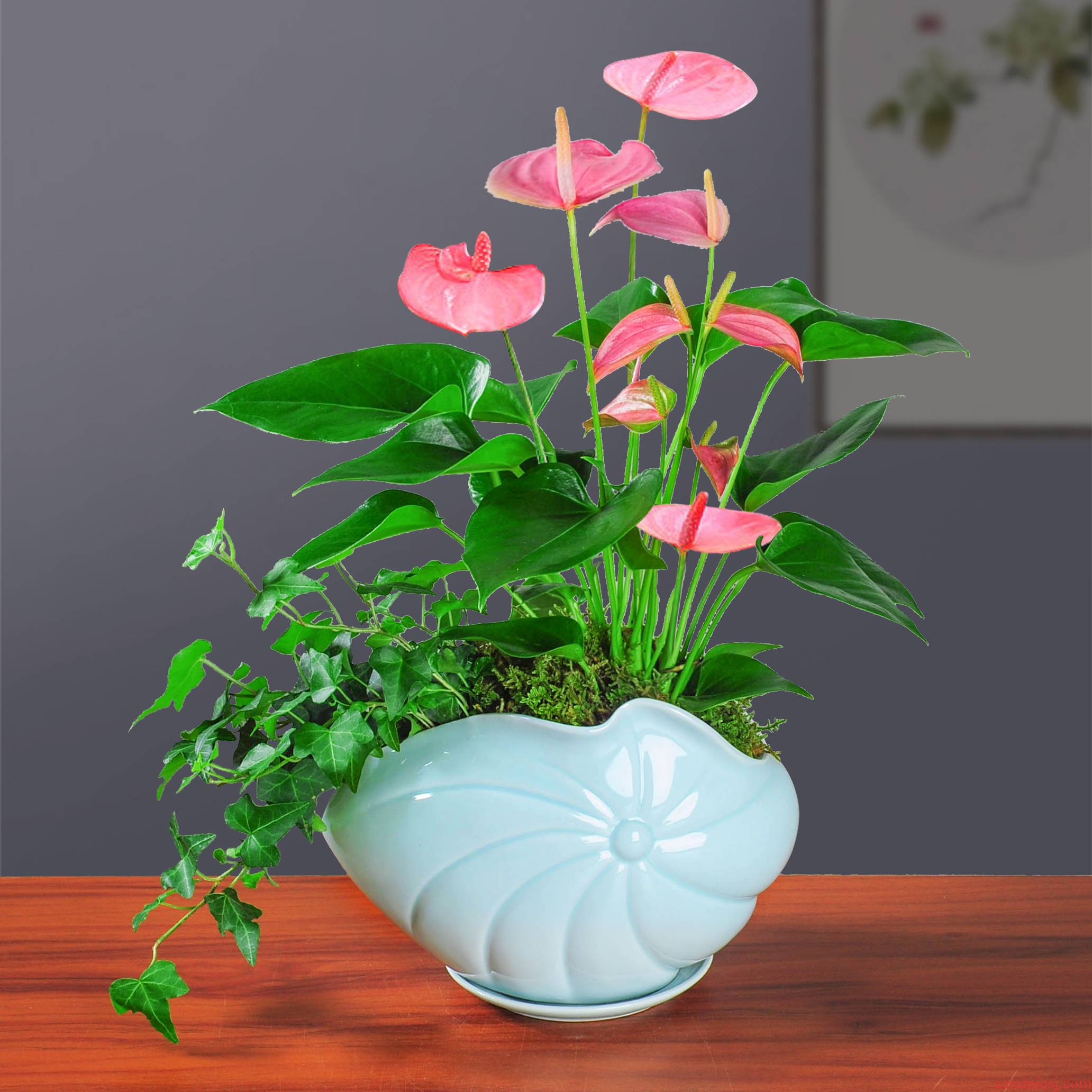 Creative ceramic celadon pot fleshy mage with tray was contracted and other green the plants butterfly orchid Creative move