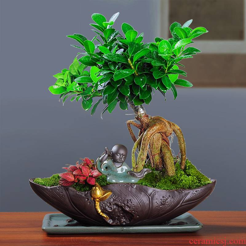 Ceramic Chinese desktop see colour black pottery flowerpot landscape DIY micro landscape red maple tree asparagus individuality creative purple