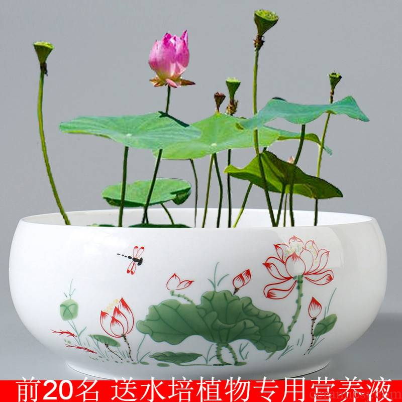 Large bowl lotus leaf, lotus nonporous daffodil copper grass special ceramic water plant a flower pot special offer a clearance