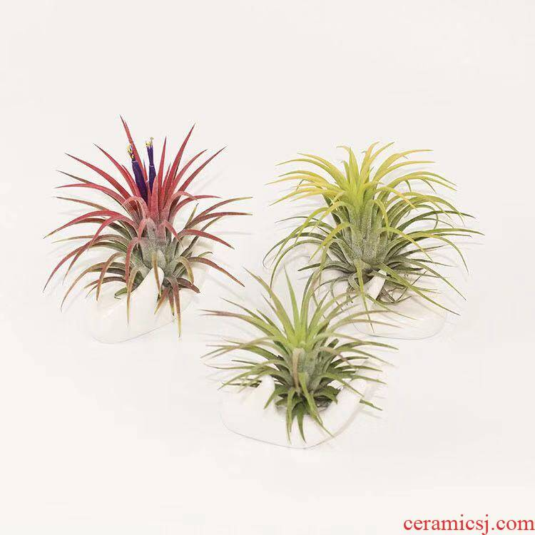 Air pineapple LOVE base finger citron holding red yellow green elves creative soilless green plant office interior decoration