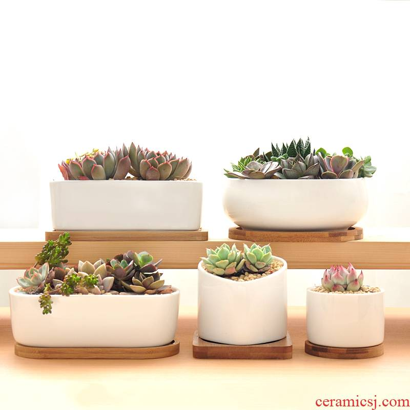 Beatified meaty plant flower POTS with tray was contracted creative meat meat rectangular white porcelain ceramic platter green plant POTS